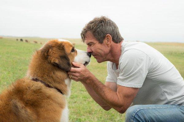 Эксперты опубликовали ТОП-5 фильмов про собак